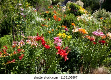 lilies in a colorful garden