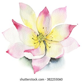 Lilies and lotuses on a white background. Isolated in white. lotus. Watercolor pink lotus flower icon isolated on white background. Watercolor pink lotus flower icon isolated on white background
