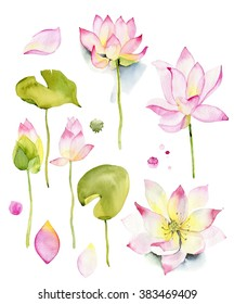 Lilies and lotuses on a white background. Watercolor set. Isolated in white. lotus. Watercolor. Hand painted floral watercolor set, branches and leaves isolated on a white background. Art icon design