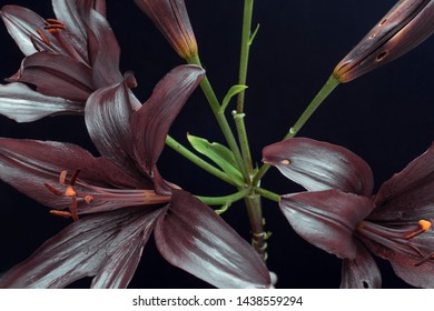 lilies on a dark background, abstract color buds. lily branch