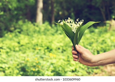 Lilies of the valley. A bouquet of lilies of the valley in a woman's hand. The first flowers, spring flowers. woman holding a bouquet of flowers lily of the valley