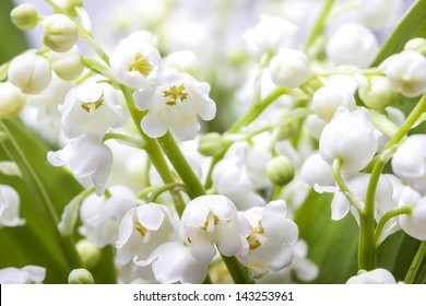 Lilies of the valley. Closeup, selective focus