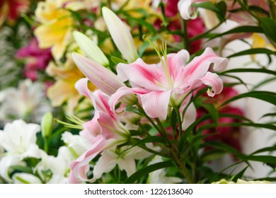 Lilium flowers. Lily (disambiguation) Lilies Lilium (band). Lilium (members of which are true lilies) is a genus of herbaceous flowering plants growing from bulbs