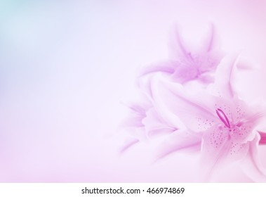 Lilly Flower, Pastel Tone Color,Background, Copy Space