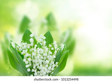 lilly of the valley flowers close up on green bokeh background with copy space