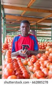 LILONGWE, MALAWI - SEPTEMBER 04 2009: An African Malawian man sells tomatoes in a basic street fruit market near Lilongwe. Many Malawian traders sell their produce in markets along the rural roads.