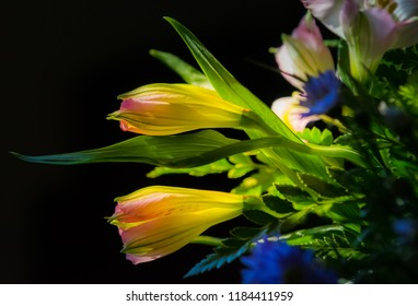 Lily blooming colorful photography art still life Colorful lilies