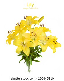Lily bunch isolated on white background with sample text