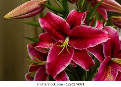 Lily (disambiguation) Lilies Lilium (band). Lilium is a genus of herbaceous flowering plants growing from bulbs