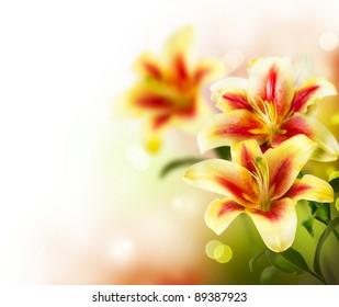 Lily Flowers border design.Spring Flowers