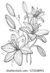 Lily flowers coloring book raster illustration. Anti-stress coloring for adult. Tattoo stencil. Black and white lines. Lace pattern
