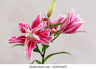 Lily flowers. Lily (lat. Lílium) is a genus of plants of the Lily family (Liliaceae). Perennial grasses with bulbs