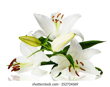 Lily flowers on white background