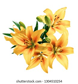 Lily flowers painted in yellow and orange colors, isolated on white background.