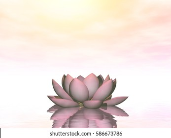 Lily lotus flower - 3D render