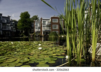 Lily pads and Bull rushes in the pond.