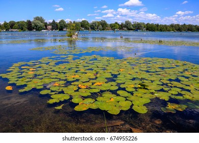 Lily pads in Elk Lake on a nice summer day at Elk Rapids, Michigan, USA