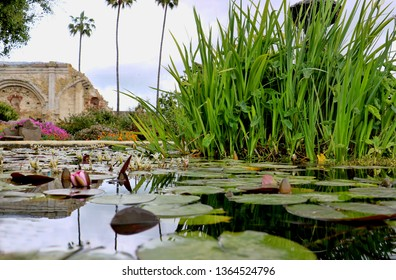 Lily pads and grass is reflected in a courtyard fountain