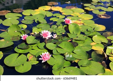 Lily pads in the Huntsville Botanical Garden