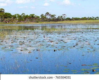 Lily pads and other marsh vegetation in Savannas Preserve State Park, which preserves freshwater marshes, or savannas, along Florida's east coast.
