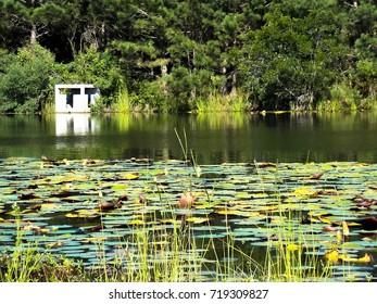 Lily pond Hilton Head Lakes