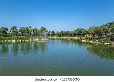 Lily pond in summer park. Garden pond on natural landscape. Small lake with marsh plants and lilies. Water garden or natural pool. Pond in summer