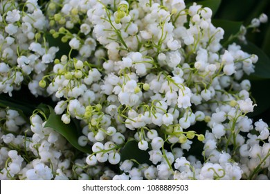 lily of the valley background spring flower