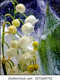 Lily of the valley embedded in ice