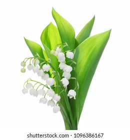 lily of the valley flower isolated on white.