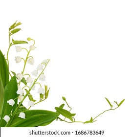 Lily of the valley flowers and bindweed sprigs in a corner arrangement isolated on white background