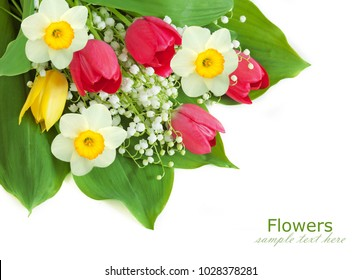 Lily of the valley flowers bunch isolated on white with sample text