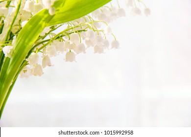 Lily of the valley flowers. Natural background with blooming lilies of the valley lilies-of-the-valley.