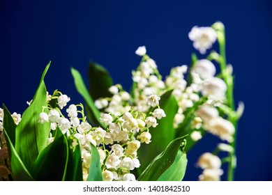 Lily of the valley - small white flowers in a garden in Poland