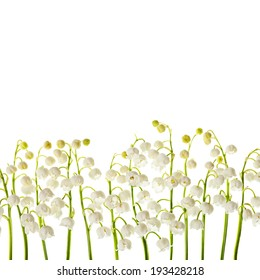 Lily of the valley white flowers isolated border background