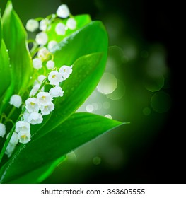 Lily-of-the-valley Flowers Border Design. Bunch of White Spring Flower over black background