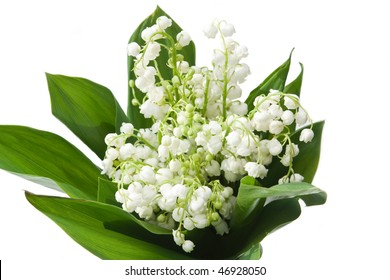 lily-of-the-valley with isolated background