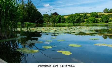 Lilypads on the Lake