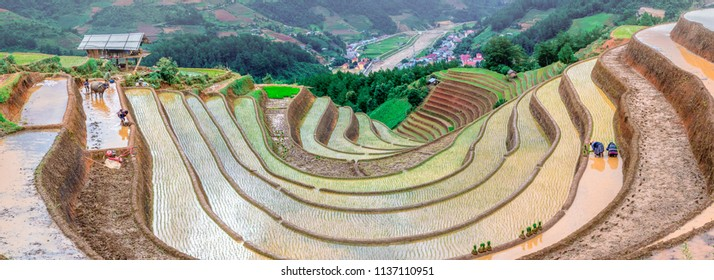 LIM MONG, VIETNAM - JULY 11, 2018: Rice fields on terraced. Fields are prepared for planting rice. Huyen Mu Chang Chai. Northen Vietnam
