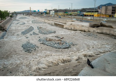 Lima, Peru - February 19, 2017: Flood water in the Rimac River in the centre of Lima Peru. Flood water coming from Andes causing serious damage and fatalities. Small pigeon surveying the scene.