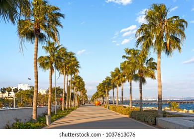 Limassol, Cyprus - Beautiful promenade alley with palm trees.