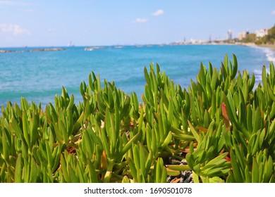 limassol cyprus coast line in summer