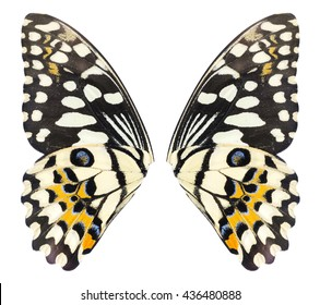 Lime Butterfly wings isolated on white background. File contains a clipping path, Papilo demoles
