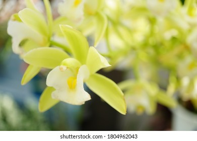 Lime green Orchid in a garden
