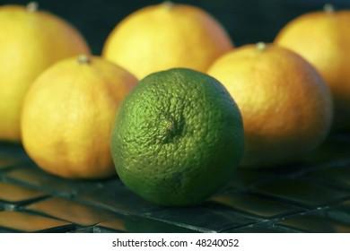 Lime in Group of Lemons