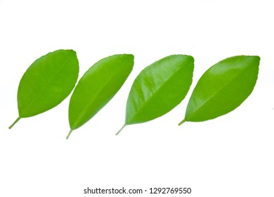 Lime leaves isolated on white background