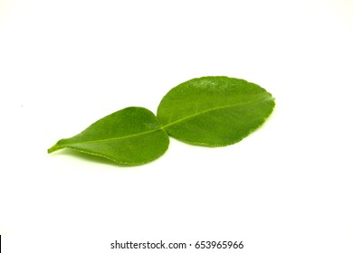 Lime leaves on white background.
