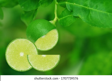 Lime slice with leaf at the garden