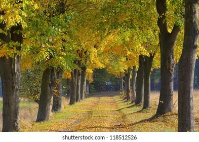 lime tree avenue