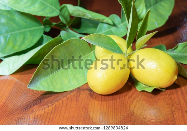 limequats with leaves