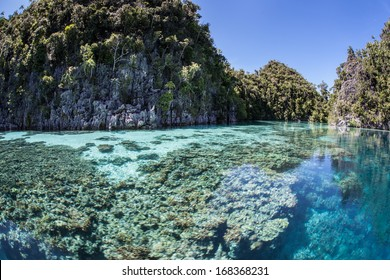 Limestone islands are ancient reefs that have been uplifted above the waterline by geologic events. These particular islands exist in Raja Ampat, Indonesia, an extremely diverse region for sea life.